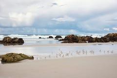 Kleine vogels in het strand van Vreedzame oceaan Royalty-vrije Stock Foto's
