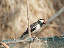 Kleine vogelzitting in bamboe stock afbeeldingen