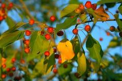 Kleine vruchten. royalty-vrije stock foto