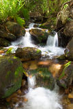Kleine Wasserfälle des Baums lizenzfreies stockbild