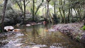 Kleine Wasserfälle des transparenten Wassers innerhalb des Berges stock video