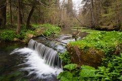 Kleine watercascade in een moeras Royalty-vrije Stock Afbeelding