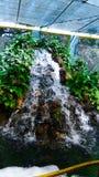 Kleine waterdaling met installaties royalty-vrije stock afbeelding