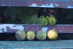 Kleine watermeloenen op een oude houten achtergrond Royalty-vrije Stock Foto