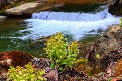 Kleine waterval royalty-vrije stock afbeeldingen