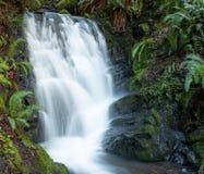 Kleine waterval in de Kustwaaier van zuidelijk Oregon stock foto's