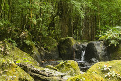 Kleine waterval in de wildernis Royalty-vrije Stock Foto's