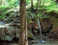 Kleine waterval in het bos onder mos en rotsen royalty-vrije stock afbeelding