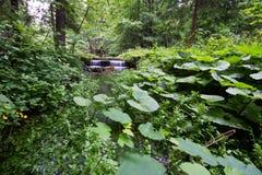 Kleine waterval in het moeras Stock Foto's