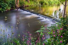 Kleine waterval met bloemen in Voorgrond stock afbeelding
