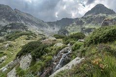Kleine waterval onder luxueuze alpiene vegetatie Stock Fotografie