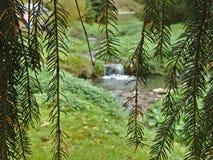 Kleine waterval in pijnboomhout stock afbeelding