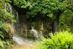 Kleine waterval in wildernis stock afbeelding