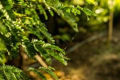 Kleine Web spider auf grünen Blättern Stockbilder