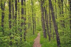 Kleine weg door een bos in de zomer Stock Foto