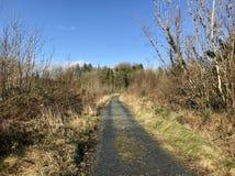 Kleine weg in het bos Royalty-vrije Stock Foto's