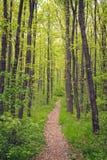Kleine weg in het bos Royalty-vrije Stock Afbeelding