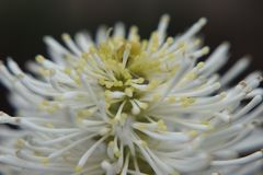 Kleine weiße Blume auf Grün lizenzfreie stockfotografie