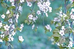 Kleine weiße Blumen auf Niederlassung Stockbilder