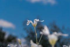 Kleine weiße dekorative Blumen Stockbilder