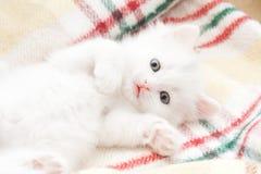 Kleine weiße Katze Lizenzfreie Stockbilder