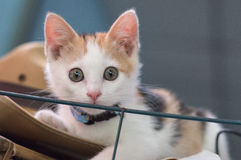 Kleine weiße Katze Lizenzfreies Stockbild