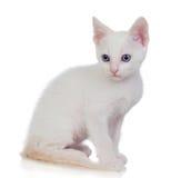 Kleine weiße Katze mit blauen Augen Lizenzfreie Stockfotos