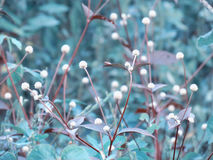 Kleine weiße Wiesenblumen auf dem Gebiet Abbildung der roten Lilie Lizenzfreies Stockfoto
