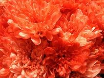 Kleine weiche Blumenblätter im Licht Lizenzfreies Stockbild