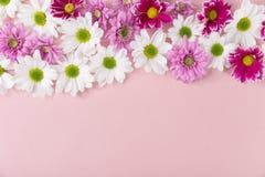 Kleine weiche verschiedene farbige Blumen Stockfotos
