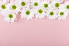 Kleine weiche weiße Blumen Stockfotos