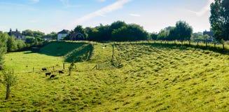 Kleine Weide mit Schafen am Innere eines Grabens Lizenzfreie Stockbilder