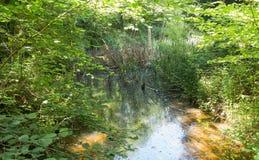 Kleine weide in mooi bos, Zwitserland Royalty-vrije Stock Fotografie
