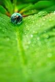 Kleine Welt in der Natur Stockbild