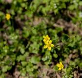 Kleine wilde Blume Stockfotografie