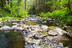 Kleine wilde rivier in Boheems bos Stock Foto