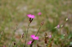 Kleine Wildflowers Lizenzfreies Stockbild
