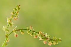 Kleine wildflowers Stock Fotografie