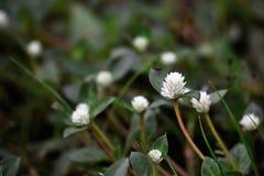 Kleine witte bloem stock foto's