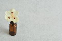 Kleine witte bloem Stock Foto