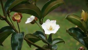 Kleine Witte Bloem op Groen royalty-vrije stock foto