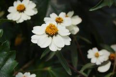 Kleine witte bloemen Stock Fotografie