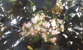 Kleine witte bloemen Royalty-vrije Stock Fotografie