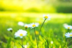 Kleine witte bloemen Stock Afbeeldingen