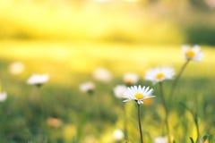 Kleine witte bloemen Stock Foto's