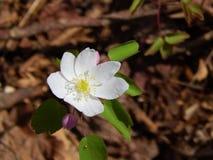Kleine witte bloemen in grimmige de zomermiddag Royalty-vrije Stock Fotografie