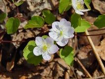 Kleine witte bloemen in grimmige de zomermiddag Stock Afbeelding