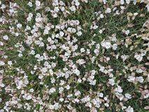 Kleine witte bloemen in het platteland stock fotografie