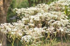 Kleine Witte bloemenachtergrond Royalty-vrije Stock Afbeelding
