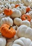 Kleine Witte Pompoenen met Vijf Kleine Oranje Pompoenen stock afbeelding